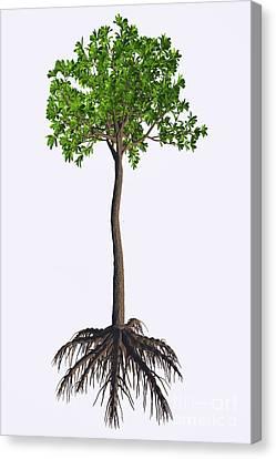 Glossopteris Sp Tree Canvas Print