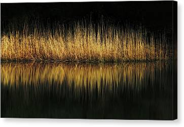 Glow And Reflections At Lakes Edge Canvas Print