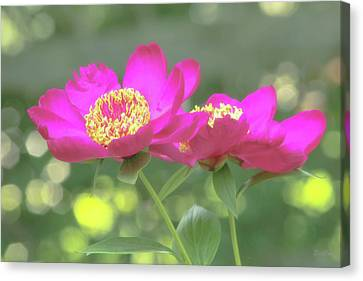 Canvas Print featuring the photograph Glow Blossoms by Deborah  Crew-Johnson
