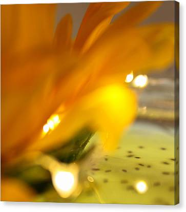 Canvas Print featuring the photograph Glow by Bobby Villapando