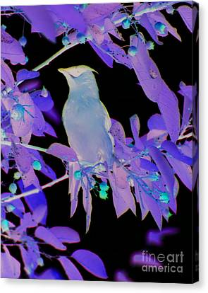 Canvas Print featuring the photograph Glowing Cedar Waxwing by Smilin Eyes  Treasures