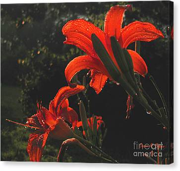 Canvas Print featuring the photograph Glowing Day Lilies by Donna Brown
