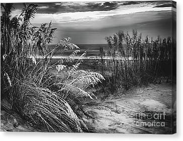 Canvas Print featuring the photograph Glowing Dunes Before Sunrise On The Outer Banks Bw by Dan Carmichael