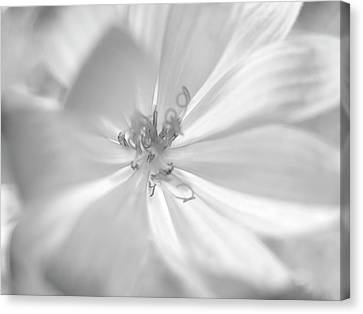 Glowing Flower, Black And White Canvas Print by Nat Air Craft
