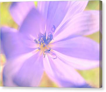 Glowing Flower, Lavender Canvas Print by Nat Air Craft