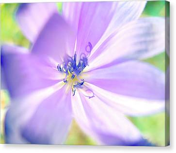 Glowing Flower, Pink  Canvas Print