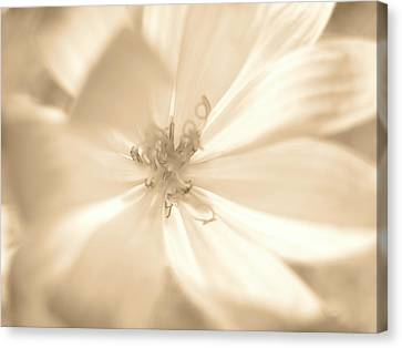 Glowing Flower, Sepia Canvas Print by Nat Air Craft