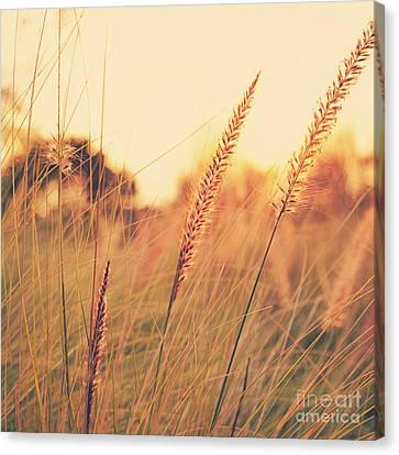 Glowing Fountain Grass - Hipster Photo Square Canvas Print by Charmian Vistaunet