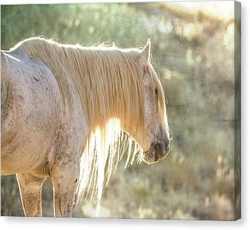 Glowing Canvas Print by Mary Hone