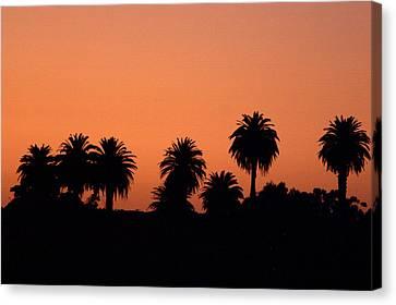 Glowing Palms Canvas Print by Brad Scott