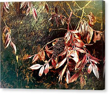 Glowing Sumac With Berries Canvas Print by Bellesouth Studio