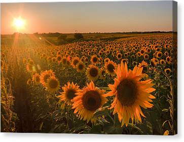 Canvas Print featuring the photograph Glowing Sunflowers by Scott Bean