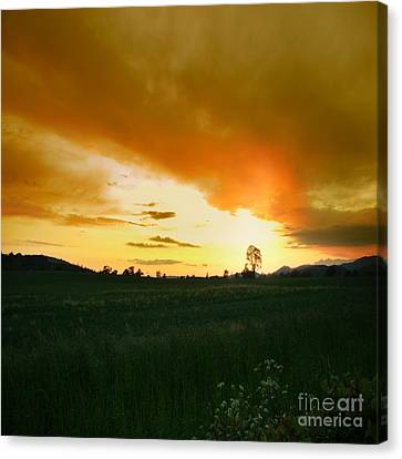 Glowing Tree Canvas Print by Angel  Tarantella