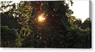 Canvas Print featuring the photograph Glowing Tree by Michael Albright