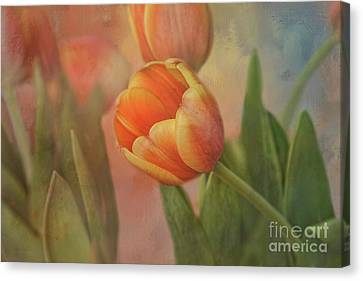 Glowing Tulip Canvas Print by Joan Bertucci