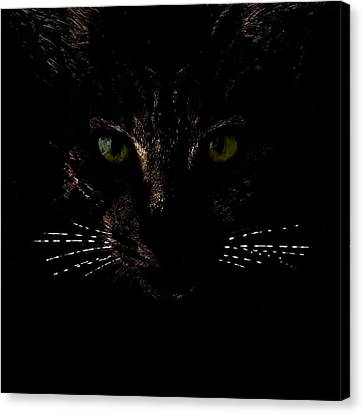 Glowing Whiskers Canvas Print by Helga Novelli