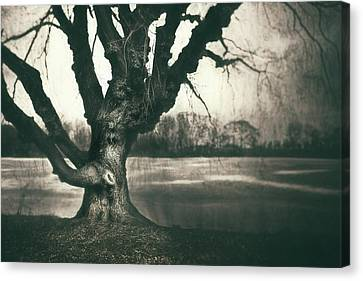 Gnarled Old Tree Canvas Print by Scott Norris