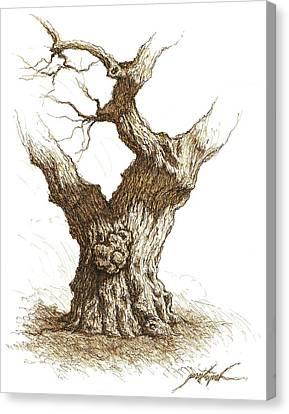 Burl Wood Tree  Canvas Print