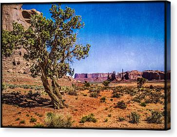 Gnarled Utah Juniper At Monument Vally Canvas Print