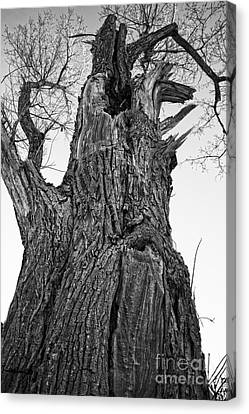 Gnarly Old Tree Canvas Print by Edward Fielding