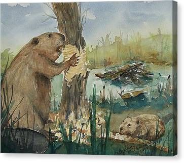 Gnawing Beaver Canvas Print