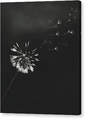 Canvas Print featuring the photograph Go Forth Bw by Heather Applegate