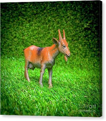 Toy Animals Canvas Print - Goat Figurine by Bernard Jaubert