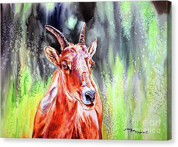 Goat From The Mountain Canvas Print by Tracy Rose Moyers