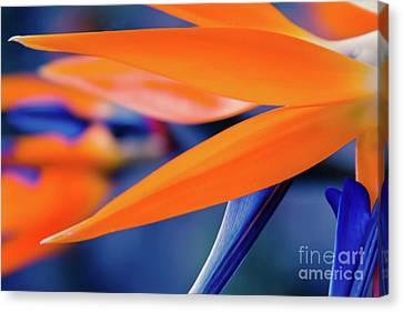 Canvas Print featuring the photograph Gods Garden by Sharon Mau