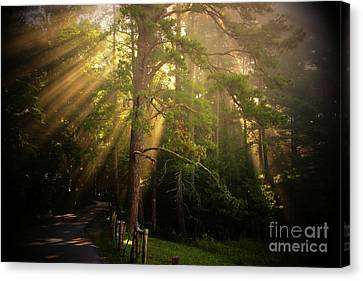 God's Light 2 Canvas Print