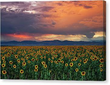 Canvas Print featuring the photograph God's Sunflower Sky by John De Bord