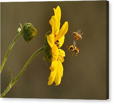 Canvas Print featuring the photograph God's Work by Al Swasey