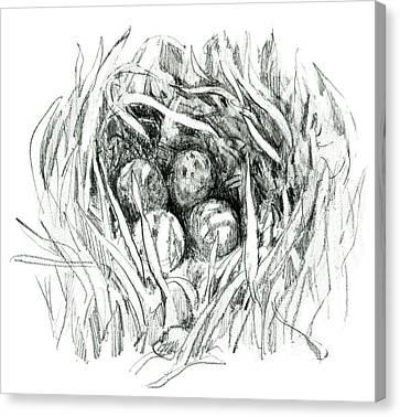 Godwit Nest Canvas Print