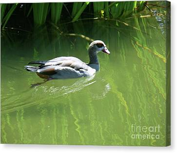 Going For A Swim Canvas Print by Methune Hively