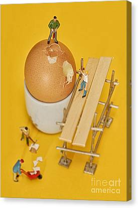 Going To Work On An Egg Canvas Print by John Boud