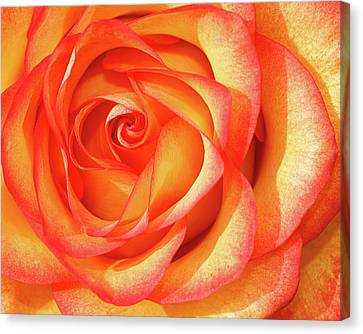 Canvas Print featuring the photograph Gold And Red by Dawn Currie
