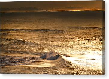 Windswept Canvas Print - Gold Dust by Sean Davey