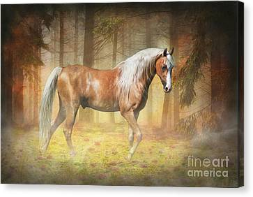 Michelle Canvas Print - Gold In The Mist by Michelle Wrighton