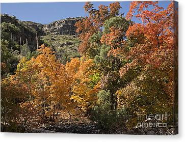 Gold In The Mountains Canvas Print by Melany Sarafis