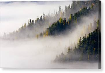 Gold In Them Hills Canvas Print