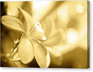 Gold Pastel Petals Canvas Print by Sean Davey