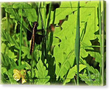 Canvas Print featuring the photograph Gold Striped Dragron by Deborah Johnson