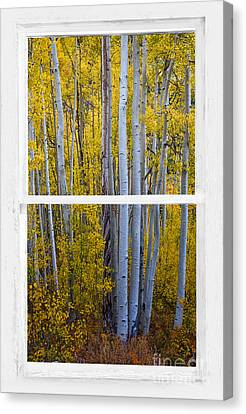 Golden Aspen Forest View Through White Rustic Distressed Window Canvas Print