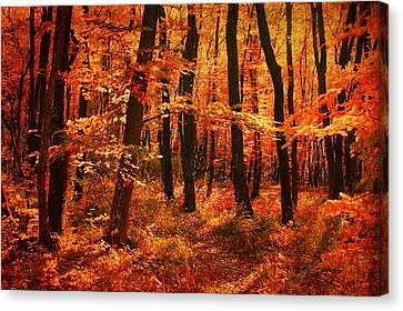 Golden Autumn Forest Canvas Print by Gabriella Weninger - David