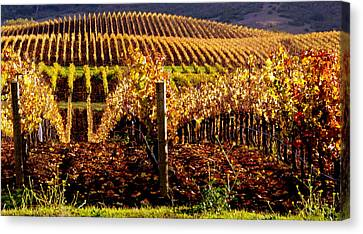 Golden Autumn Vineyard Canvas Print
