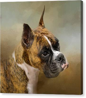 Golden Brindle Boxer Canvas Print by Jai Johnson