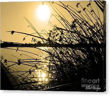 Golden California Canvas Print