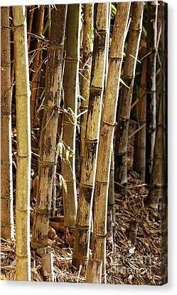 Canvas Print featuring the photograph Golden Canes by Linda Lees