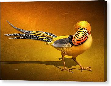 Golden Chinese Pheasant Canvas Print by John Wills