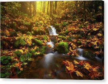 Golden Creek Cascade Canvas Print